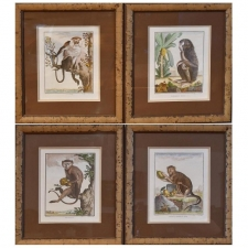 Set of 4 Framed 18th Century Hand-Colored Engravings of Monkeys by G. Buffon